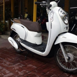 Rental Honda Scoopy 110cc Auto