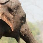 ช้างไทย ของเอกลักษณ์ไทย ของเล่นไม้แนวลากจูง ของที่ระลึก ของสะสม