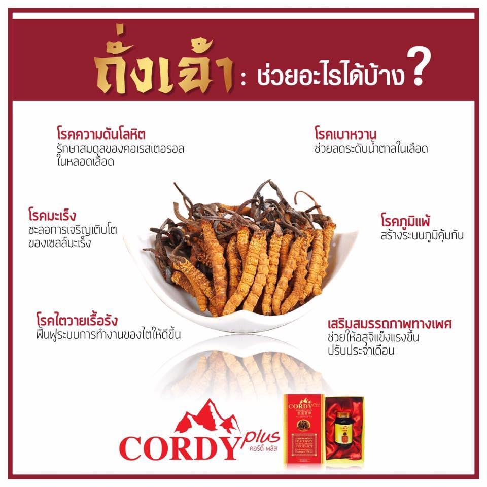 Cordy Plus คอร์ดี้พลัส